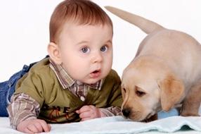 Un chien et l'arrivée de bébé